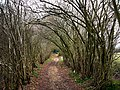 Brier Lane - geograph.org.uk - 708965.jpg