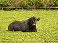 British Beef, Shroton - geograph.org.uk - 372653.jpg