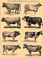 Brockhaus and Efron Encyclopedic Dictionary b59 264-2.jpg