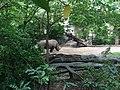 Bronx Zoo - NY - USA - panoramio (16).jpg