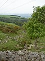 Brook and hawthorn (down) - geograph.org.uk - 804394.jpg