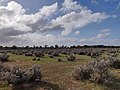 Brookfield Conservation Park (43920515664).jpg