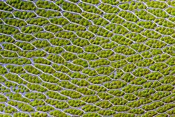 Tại sao lá cây có màu xanh lục lạp