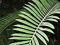 Buffalo and Erie County Botanical Gardens - 1-10 - IMG 3540.JPG