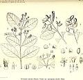 Bulletin du Jardin botanique de Buitenzorg (1921) (20439526265).jpg