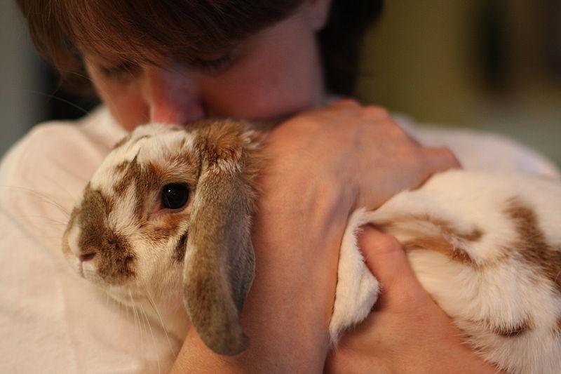 File:Bunny Cuddle.jpg