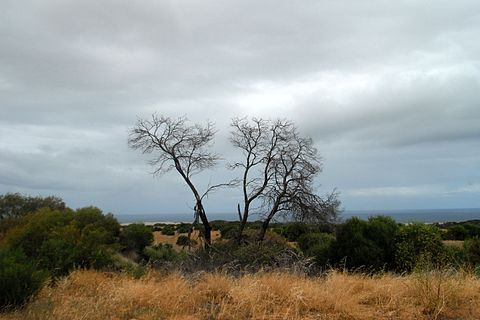 A chaparral-like bush land in the Mediterranean region of the state Bush in Western Australia.jpg