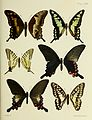 Butterflies from China, Japan, and Corea (PL. XXXII) BHL45490979.jpg