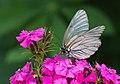 Butterfly On A Flower (62884029).jpeg