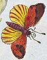 Butterfly art, from- T. Green, The universal herbal. Wellcome L0025495 (cropped).jpg
