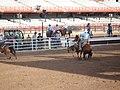 CFD Team Roping - Cowboy backing up from behind steer.jpg