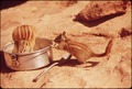 CHIPMUNKS FIND FOOD IN CAMPING AREA OF DEAD HORSE POINT STATE PARK - NARA - 545549.tif