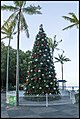 Cairns 2015 Christmas Tree-1 (22955485283).jpg