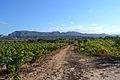 Camí entre vinyes per les Valls, Xàbia.JPG