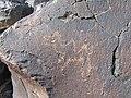 Camel - panoramio (2).jpg