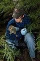 Canada Lynx Kitten - DPLA - 3c82e2782b5c29312b03528c96a45df4.jpg