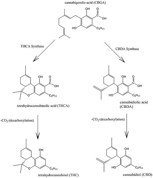 500px-Cannabidiol_and_THC_Biosynthesis.j