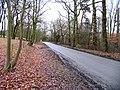 Carpet of leaves - geograph.org.uk - 1141942.jpg