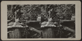 Cat atop pillow on a tree stump, from Robert N. Dennis collection of stereoscopic views 2.png