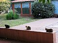 Cats in a Row (3275766840).jpg