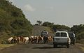 Cattle in the Road, Ethiopia 2007.jpg