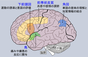 Cause of autism in different brain regions (Ja...