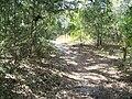 Cedar Key FL Shell Mound Park trail02.jpg