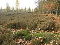 Celtic fields Sysselt (Veluwe) (4066130032).jpg