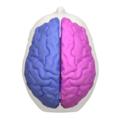 Cerebral hemisphere - 05.png