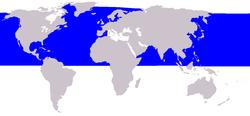En azul, la distribución del rorcual aliblanco.