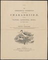 Charadriidae - 1888 - Print - Iconographia Zoologica - Special Collections University of Amsterdam - UBA01 IZ17400157.tif