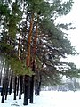 Chaykovsky, Perm Krai, Russia - panoramio (8).jpg