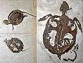 Chelydropsis murchisoni 01.jpg