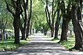Chemin bordé d'arbres Cimetière Notre-Dame-des-Neiges.JPG