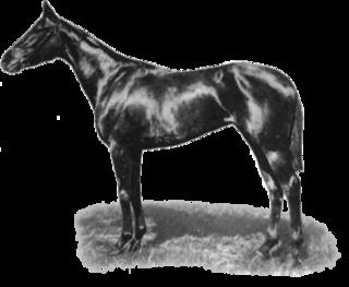 Cherimoya (horse) British Thoroughbred racehorse