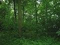 Cherry Wood - geograph.org.uk - 1375032.jpg