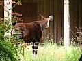 Chester Zoo (14754995923).jpg