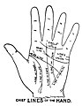 Chief Lines of the Hand.jpg