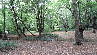 Chigwell Row Wood