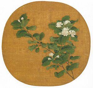 Branch of Flowering White Jasmine