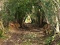 Chudleigh Bridleway 3 - geograph.org.uk - 749549.jpg