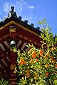 Citrus tachibana, Kofuku-ji Nanendo.JPG