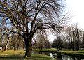 City Park in Skopje 67.JPG