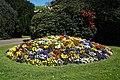 City of London Cemetery viola flower bed 1.jpg