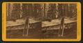 Clark's near the Big Trees Grove, Mariposa County, Cal, by John P. Soule.png