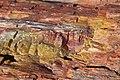 Close up- Yellow, Red, Pink petrified log.jpg