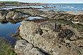 Coastline at Ardross - geograph.org.uk - 183785.jpg