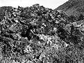 Collectie Nationaal Museum van Wereldculturen TM-10021336 Vegetatie op rotsachtige helling Saba -Nederlandse Antillen fotograaf niet bekend.jpg