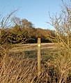 Collingham Lane footpath walk (6) - geograph.org.uk - 1126543.jpg