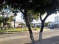 Colonia Santa Lucia, San Salvador, El Salvador - panoramio (21).jpg